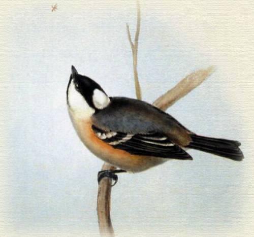 Птицы европы азии и америки